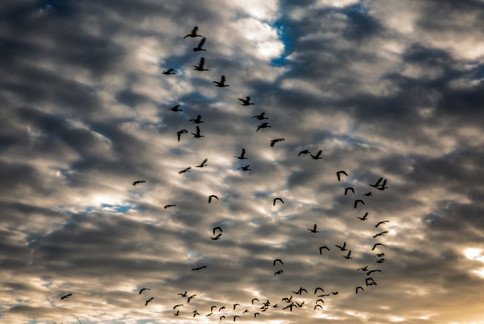 Clouds and birds 12-15 4O4A1506Rcolor.jpg