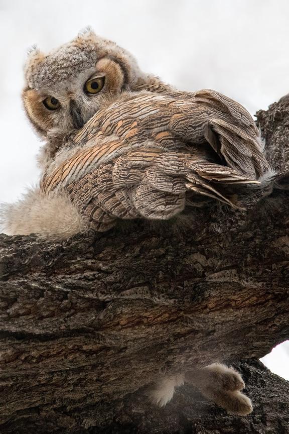I Know You! Owl Baby web 4-24-2020 9723R