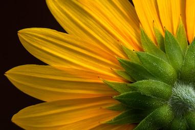 flower 8-17 4O4A2502Rcolor.jpg