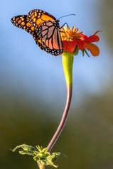 Tartakoff Monarch 9-18 Wash Park  0Y3A82