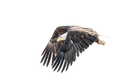 Determined RMA eagle web 5-18-20 0346Rco
