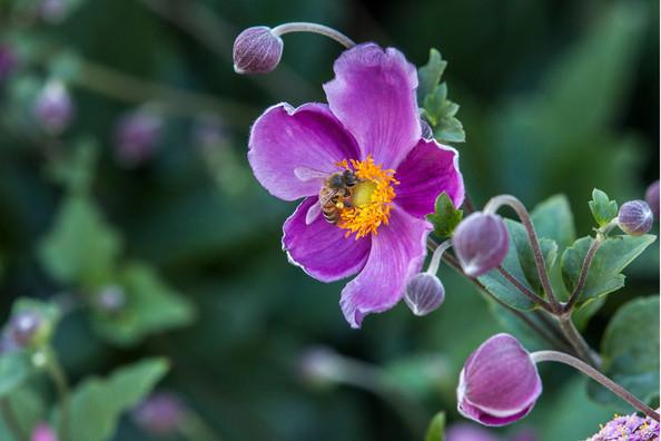 Flower 9-15 8577Rcolor.jpg