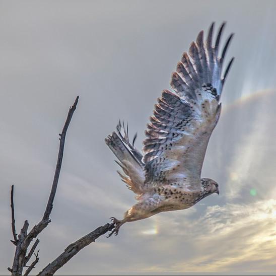 Hawk-9-15-8894Rcolorcard.jpg