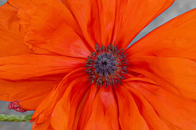 A Moment of Joy web 5-16-20 0277Rcolor.j