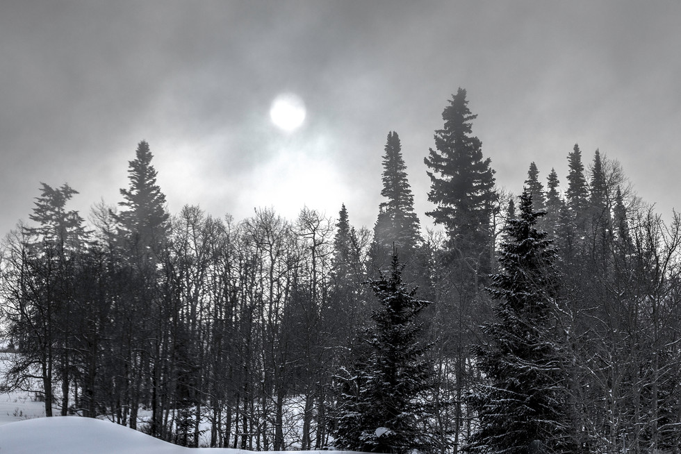 Rising Sun through Mountain Trees 1-12-1