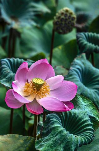 Lotus 3-5-19 Chelsea Bali 0Y3A6555Rcolor