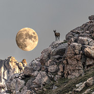 Three Mountain Goats and the Moon web 8-21 2537Rcolor.jpg