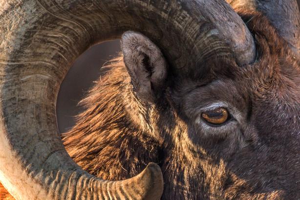 longhorn zoo 11-16 4O4A1287Rcolor2.jpg