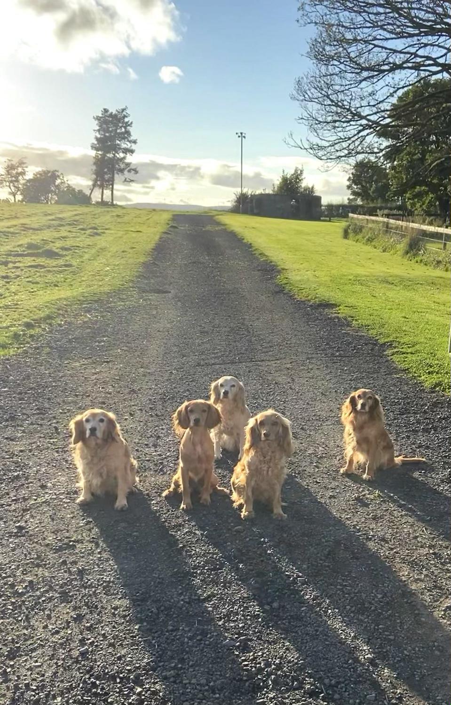 Intro to puppy obedience gundog training