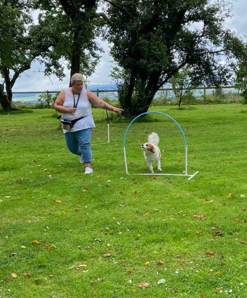 Canine Hoopers Advanced Course - 4 Weeks