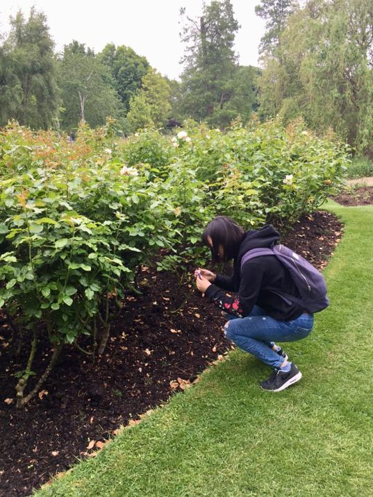 Queen Mary's Rose Garden, London