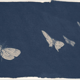2018 Size: 20x30 in. (50.8 x 76.2 cm.) This printing technique is a cyanotype darkroom effect brushed with a red or orange coat on a cool tone base. We are so excited about this paper which is unsurpassed hand-crafted prints using proven, bespoke techniques and superior-quality materials, this paper is also sustainable yet archival made with a bamboo base to create a smooth deep matte finish.  Please contact gallery for price.