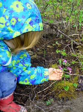 Child discovering wildflowers in Yellowstone