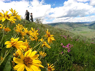 Hiking in wildflowers on Yellowstone's Specimen Ridge