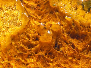 Closeup view of bacterial mats in a Yellowstone hot spring