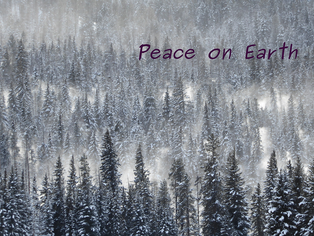 Peace on Earth, snow on pines in Yellowstone Park