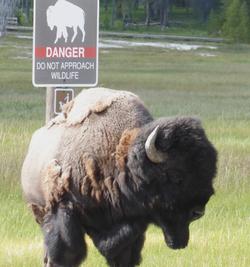 Danger! Do Not Approach Wildlife!