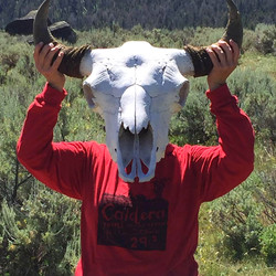 Bison Skull as mask, Yellowstone Park