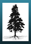 Silhouetted tree, Walking Shadow Ecology Tours of Yellowstone logo