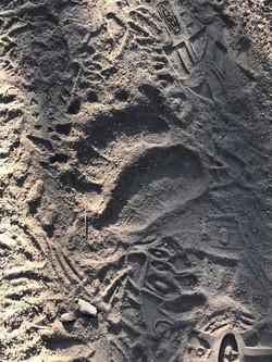 Where Grizzlies Roam, Yellowstone National Park