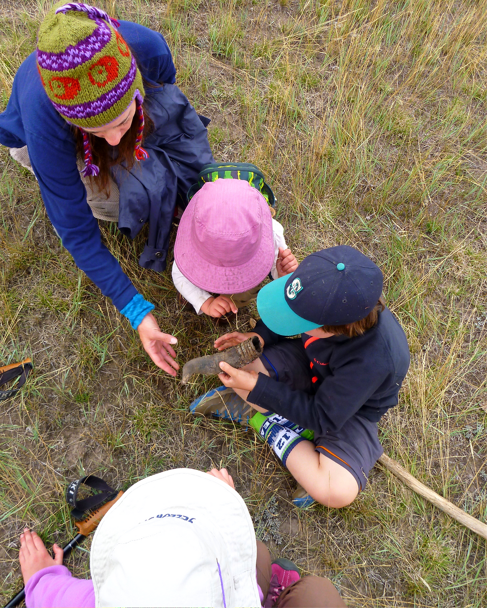 A family invesitgates a pronghorn sheath found on a hike in Yellowstone