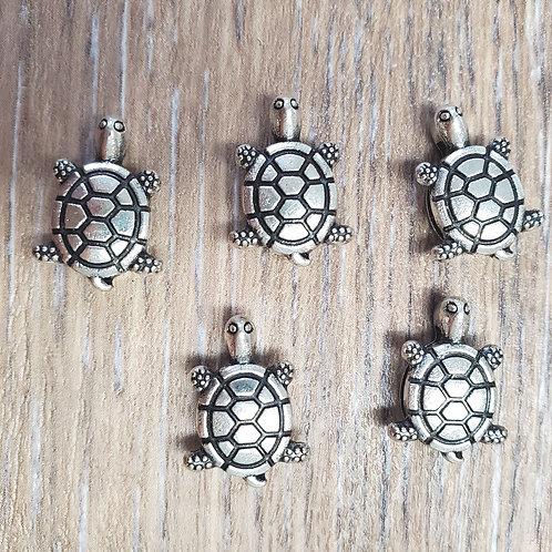 Turtle Slider (5)