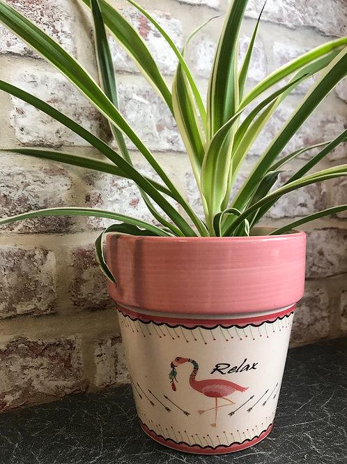 Spider plant in flamingo ceramic pot
