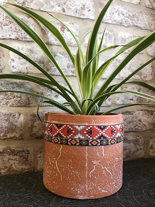 Spider plant in patterned terracotta pot