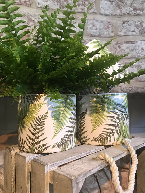 Boston fern with fern ceramic pot