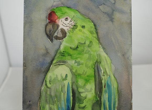 Melanie Fyfe-Baarda : Green Parrot
