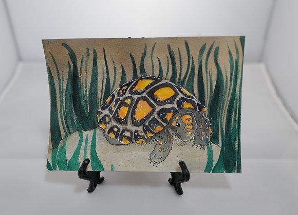 Melanie Fyfe-Baarda : Turtle