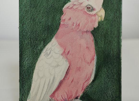Melanie Fyfe-Baarda : Pink Parrot