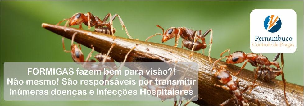 Dedetização contra Formigas