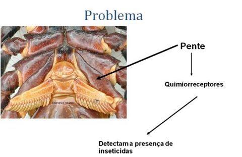 Quimiorreceptores escorpião