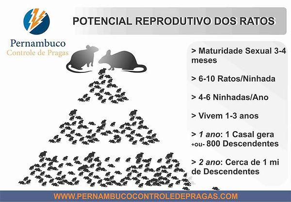 Reprodução dos roedores