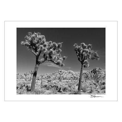 JOSHUA TREE   Tom Epperson