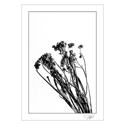 Plant Still Life 3   Jones Palteng
