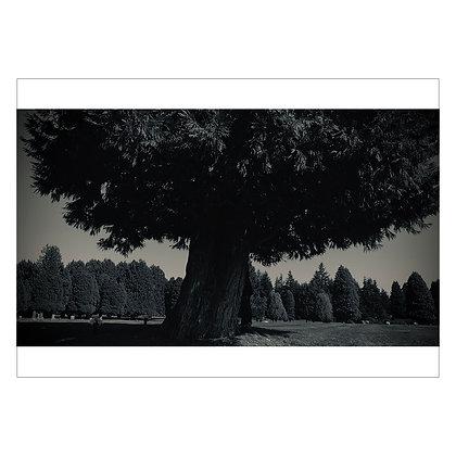 THIS TREE NEAR JIMI'S GRAVE-IMG4316 | Idan Cruz
