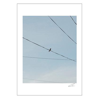 Bird on wire | Gio Panlilio