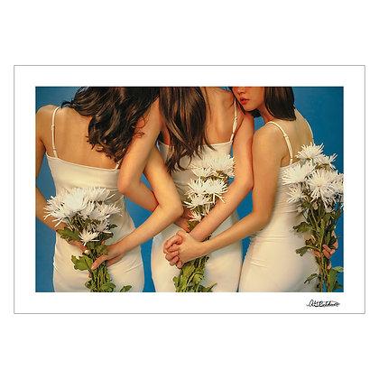 Crysanthemum | Andrea Beldua