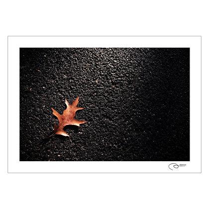 Central Park Leaf | Patrick Mateo