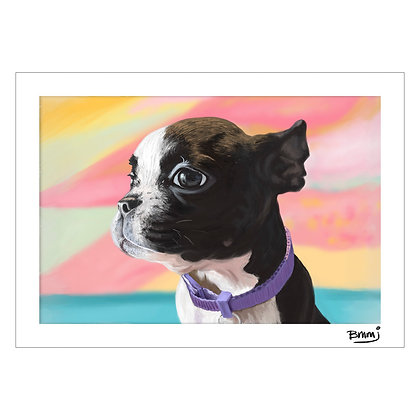 Boston Terrier | Benjie M. Marasigan Jr.