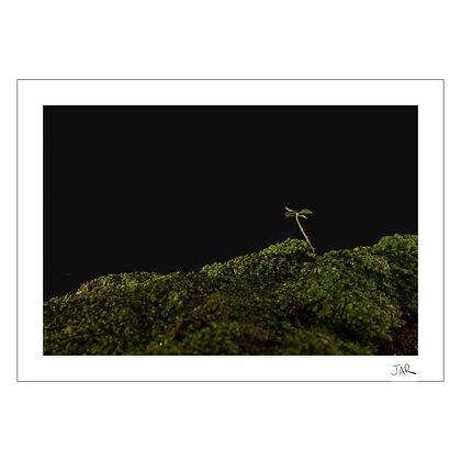 Moss 3 | Jar Concengco