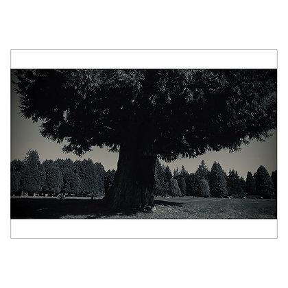 THIS TREE NEAR JIMI'S GRAVE-IMG4313 | Idan Cruz