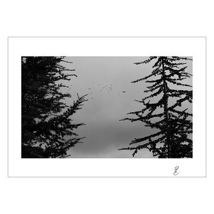 Bird of Prey, Hillsborough San Fransisco, Jan 2020 | Jed Escueta