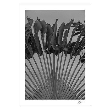 Ravenala | Carmen del Prado