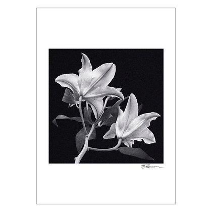 FLOWER STUDY | Tom Epperson