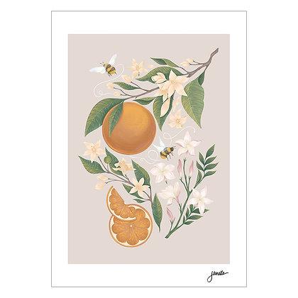 Orange Blossoms | Janelle Cruz