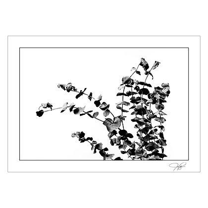 Plant Still Life 1 | Jones Palteng