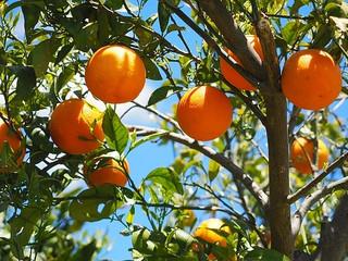 Porter du Fruit à Dieu - Gagner des âmes